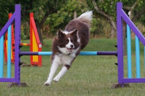 Bella jumping