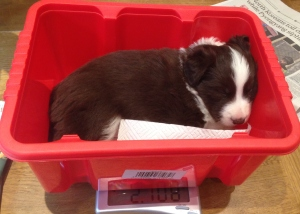 being weighed?  Time for a quick nap