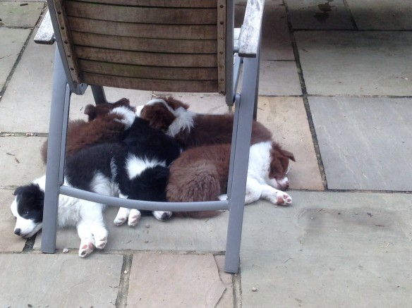 Last nap with their siblings