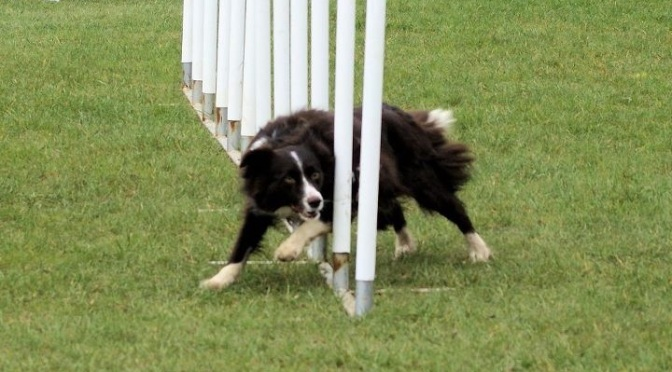 How to find a good agility club