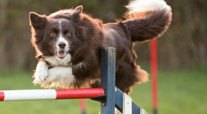 Ounce's agility training – preparing the contacts