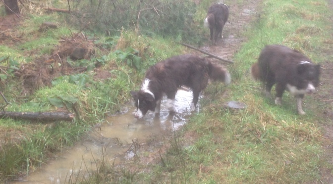 Should you walk your dog in the rain?