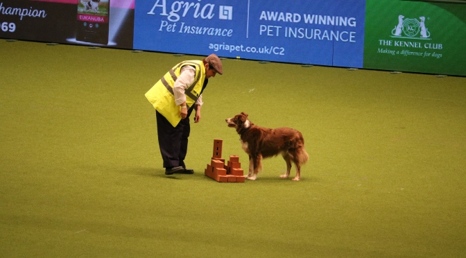 Crufts – the greatest dog show in the world