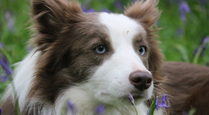 Prettiest Eyes – First place to the puppy!