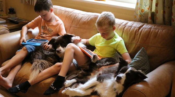 First Dog: When is the right time to add a dog to your family?