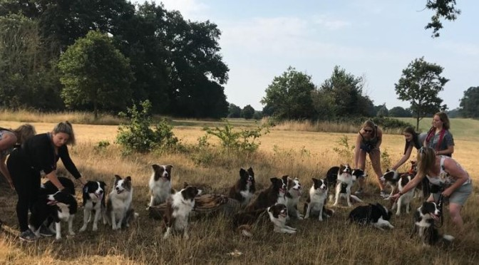 Puppy Reunion – August 2020