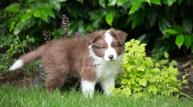 Selecting a puppy: How do you choose which one to have?