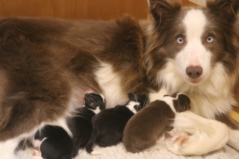Lovely litter - one day old