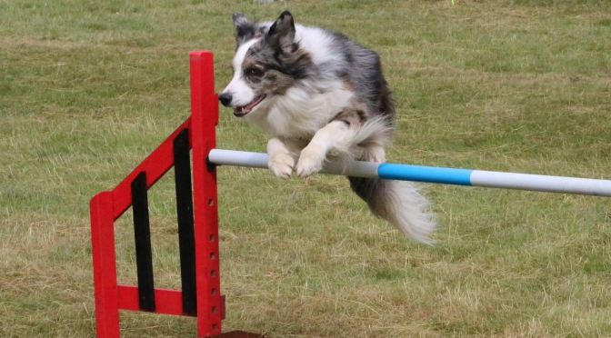 What is an Agility Show?