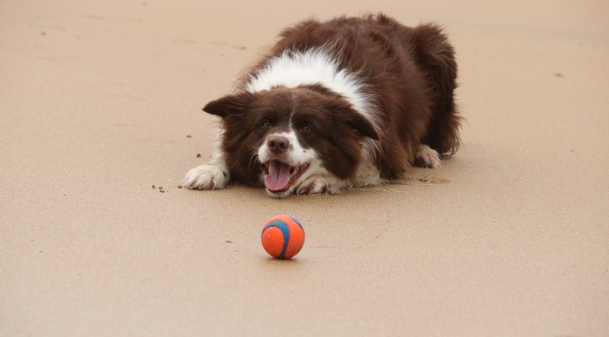 Enrichment Activities for your Dog – Guest Post by Karen Young