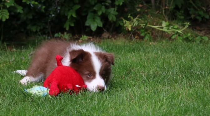 Quin's Story: Week 10 – Dog Toys